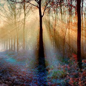 magic forest by Egon Zitter - Landscapes Forests ( winter, lightharp, fog, forest, morning, woods, mist )