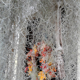 Let me give YOU a hand by Denise DuBos - Public Holidays Halloween ( eerie, skeleton, halloween, spanish moss, detached limb, conceals )