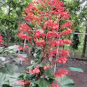Pagoda Flower