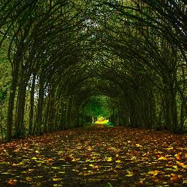 Season by Susan Wicher - Nature Up Close Trees & Bushes ( season, color, autumn, autumn colors, gate )