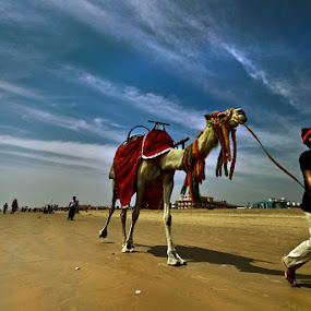 CAMEL RIDE ON THE BEACH by NEELANJAN BASU - Landscapes Travel ( ride, sea beach, sand, camel, puri, sea side, sea, places, beach, travel )