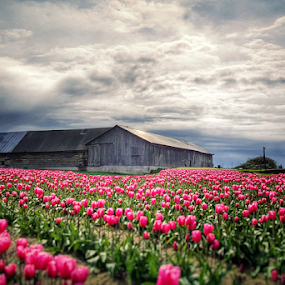 amongst it all by Todd Reynolds - Landscapes Prairies, Meadows & Fields (  )