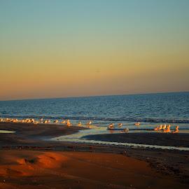 Birds at sunset by Rhonda Kay - Landscapes Sunsets & Sunrises