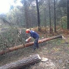 tree surgeon service in Exeter by Paul Jackson Fencing & Landscaping