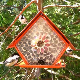 Broken Glass Bird feeder by Barbara MacInnis - Artistic Objects Glass ( broken, glass, cedar, seeds, birds, pretty )