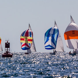Four Spinkers by Carl Albro - Sports & Fitness Watersports ( water, colors, racing, sailboat )