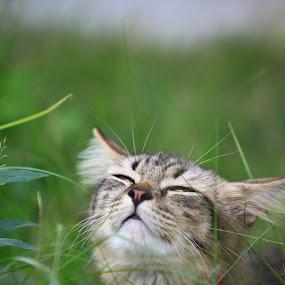 || LUFFY IS THE MONKEY || by RazeeAsada Akimura - Animals - Cats Portraits