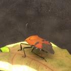 Human Face Beetle