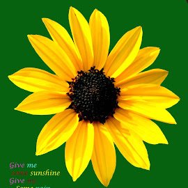 sunflower by SANGEETA MENA  - Typography Quotes & Sentences