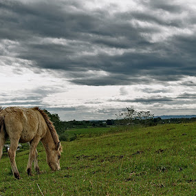 Greener Pasture by Charles Liban Jr - Animals Horses