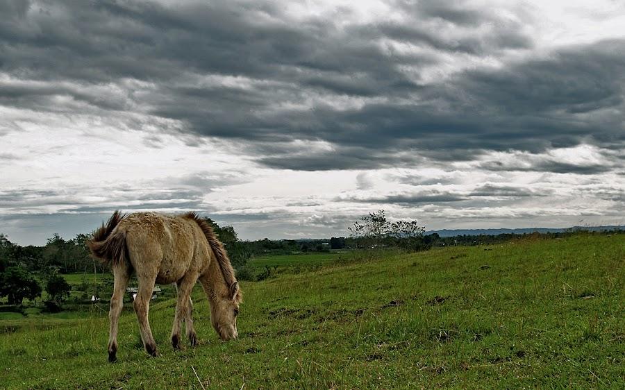 Greener Pasture by Charles Liban Jr - Animals Horses