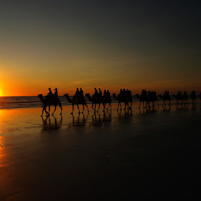 sunset ride by Kay Cypher - Landscapes Waterscapes ( ocean., riding, sunset, camels, beach )