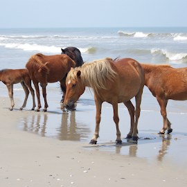 by Brian Ashcraft - Animals Horses ( fla vac 10,  )