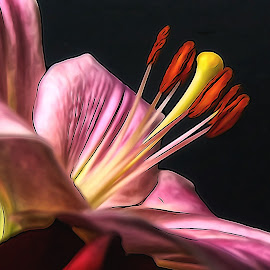 Reaching Upward by Dave Walters - Digital Art Things ( colors, digital art, mood, flowers, sony hx400v, lilly,  )