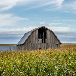 Hidden gem by Tammy Hatfield - Buildings & Architecture Decaying & Abandoned ( sky, barn, landscape, corn, fields )