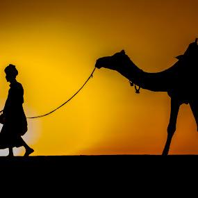 Hope by Monish Kumar - People Street & Candids ( camel, jaisalmer, desert, sunset, rajasthan,  )