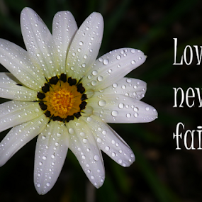 Love Never Fails by Kris Pate - Typography Quotes & Sentences
