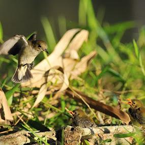Take care of by Muhammad Yamani - Animals Birds ( bird )