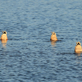 Bottoms up by Chris Mcgurgan - Novices Only Wildlife