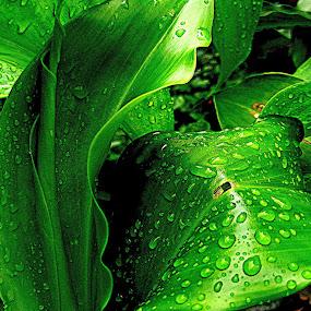 by Raj Mushahary - Nature Up Close Leaves & Grasses