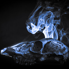 Signs of Life by Kevin Frick - Artistic Objects Other Objects ( skull, smoke, deer )
