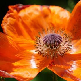 by Kathy Kehl - Flowers Single Flower