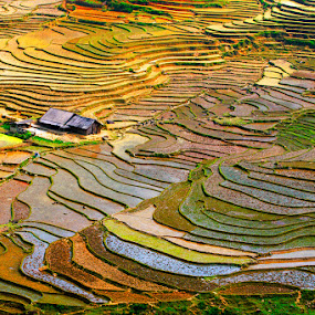 Rice field . by Hai Le - Landscapes Prairies, Meadows & Fields ( . )