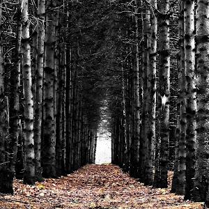 Tunel d`arbres NB colorisé Topaz_Snapseed.jpg