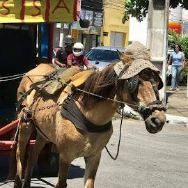 by Joatan Berbel - Animals Horses