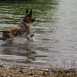 Ultra by Suzana Svečnjak - Animals - Dogs Playing ( pets, adopt, dogs, animals )