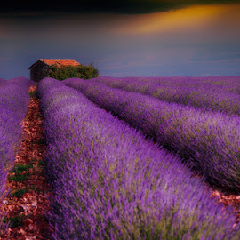 Lines by Cvetka Zavernik - Landscapes Prairies, Meadows & Fields ( color, provence, purple, lines, house )