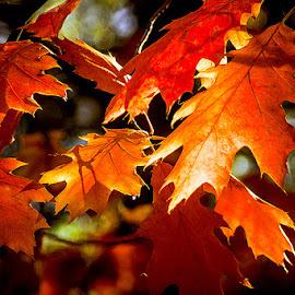 by Dragan Milovanovic - Nature Up Close Leaves & Grasses