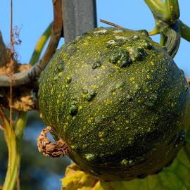 by Vladymyr Sergeev - Nature Up Close Gardens & Produce