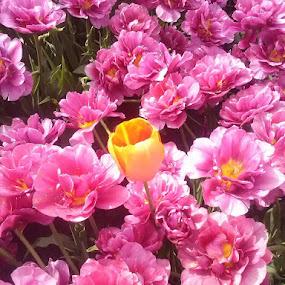 Always one by Karen McGregor - Flowers Flower Gardens (  )