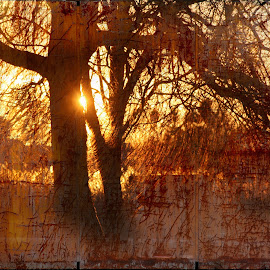 Old sunset... by Zenonas Meškauskas - Digital Art Abstract ( tree, sunset, sunshine, rust, evening )