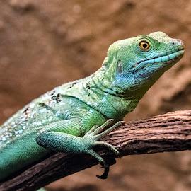by Renos Hadjikyriacou - Animals Reptiles