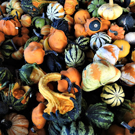 lots of gourds for the fall season display by Mary Gallo - Nature Up Close Gardens & Produce ( fall colors, fall objects, nature up close, gourds from the garden )