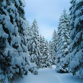 Winter landscape by Costin Mugurel - Landscapes Forests ( winter, nature, snow, trees, landscape )