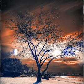 Infrared Tree by Darren Breckles - Digital Art Things ( canon, detroit river, canon 6d, tree, infrared, hoya r72, long exposure )