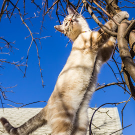 Bound and Determine  by Julie Wooden - Animals - Cats Playing ( cat, kitten, north dakota, hebron, sam, sky, blue sky, tree, nature, autumn, sunny, outdoors, scenery, feline, animal, skyscape )