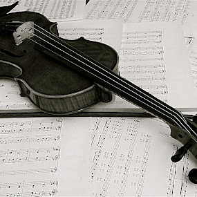 Violin by Richard Timothy Pyo - Black & White Objects & Still Life ( string instrument, musical notes, violin, string, note )