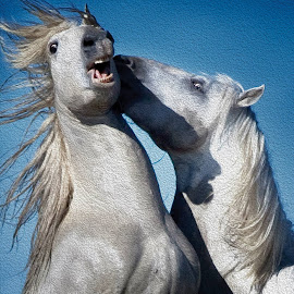 White Stallions of Camsrgue by Susan Byrd - Animals Horses