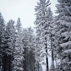 Winter in Saxony by Britta Rogge - Landscapes Forests ( winter, nature, landscape photography, forest, landscape, photography )