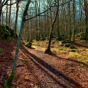 Light in forest by Janne Monsen - Landscapes Forests ( nature, seim, forest, nikon, light )