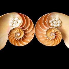 flying without wings by Adjie Tjokrosoedarmo - Artistic Objects Still Life ( flying, pearls, wings, nautilus, seashells )