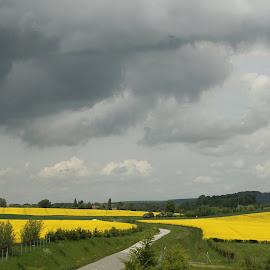 by Cora Lea - Landscapes Prairies, Meadows & Fields (  )