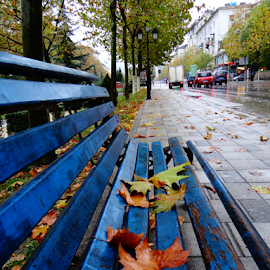fall by Dritan Zaimi - City,  Street & Park  Street Scenes