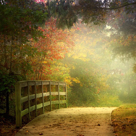 A WALK IN THE PARK by Dana Johnson - City,  Street & Park  City Parks ( park, autumn, trail, trees, landscape, walk )