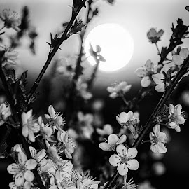 by Estislav Ploshtakov - Black & White Flowers & Plants