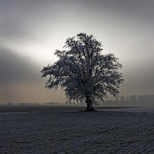 Trees_1.jpg